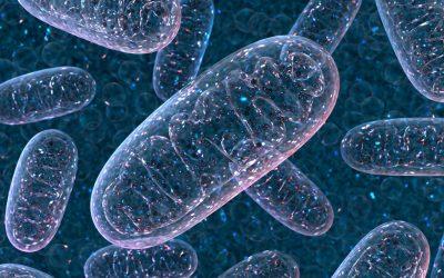 De machinerie van je mitochondriën: Van voeding naar energie